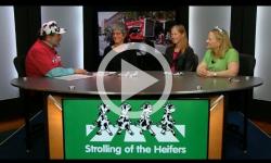 BCTV Open Studio: 2017 Strolling of the Heifers