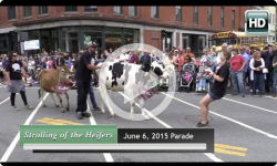 2015 Strolling of the Heifers Parade - 6/6/15