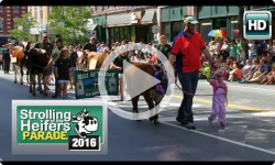 2016 Strolling of the Heifers Parade 6/4/16