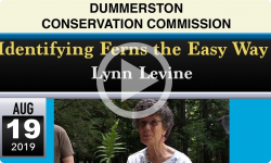 Dummerston Conservation Commission: Identifying Ferns the Easy Way with Lynn Levine, Forest Educator