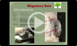 Dummerston Conservation Commission: Got Bats? 4/30/13