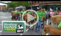 Strolling of the Heifers Parade 2017: 6/3/17