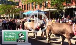 2019 Strolling of the Heifers Parade 6/8/19
